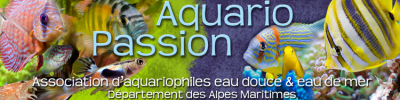 AquarioPassion